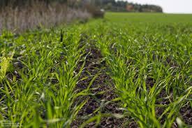 Огляд світових ринків зернових та олійних від 26.05.2020