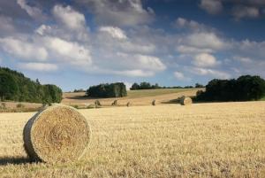 Огляд світових ринків зернових та олійних від 22.09.2020
