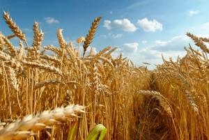 В Украине растет интерес к переработке зерна и производству продукции с добавленной стоимостью