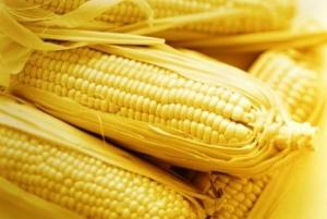 Запасы кукурузы в Украине на начало марта 2017 года превысили 10,6 млн. т