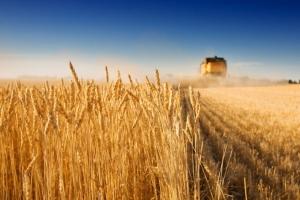 Огляд світових ринків зернових та олійних від 28.05.2020