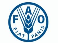 FAO / ФАО